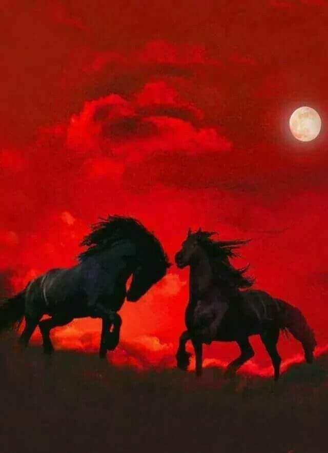 Poster Chevaux Sauvages en Pleines Natures