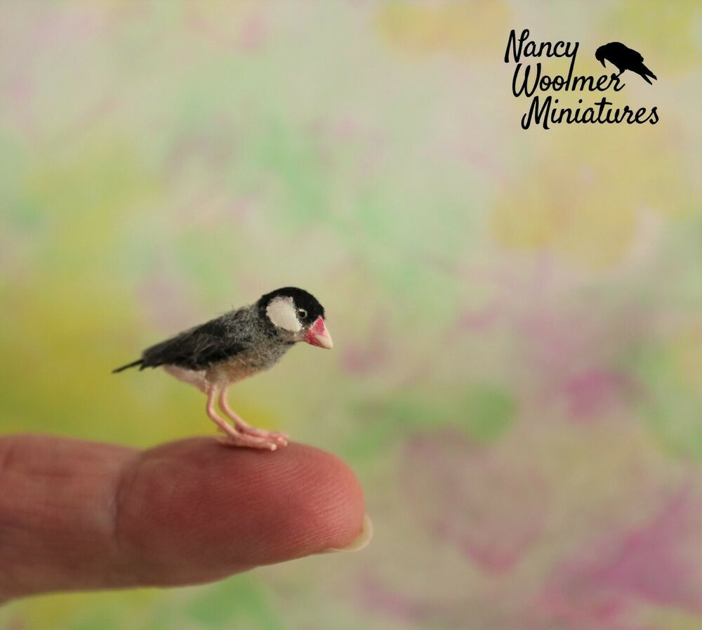 Original Ooak Dollhouse Miniature Java Rice Finch Bird By N Woolmer