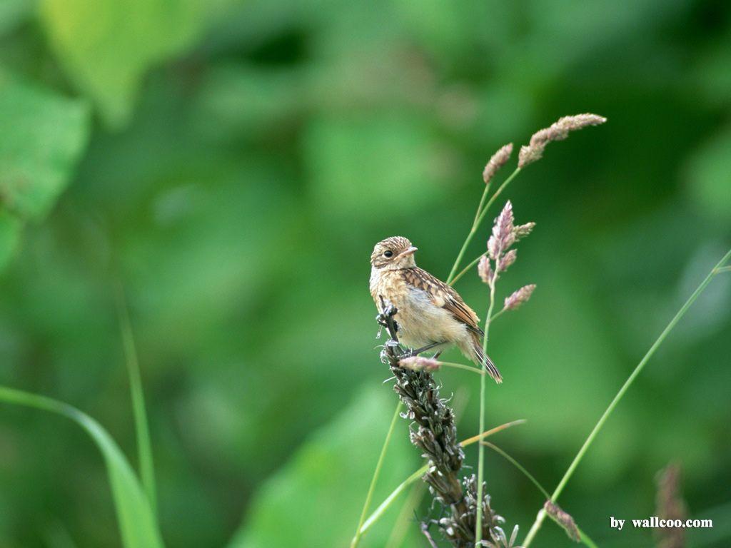 Birds Wallpapers HDWPro