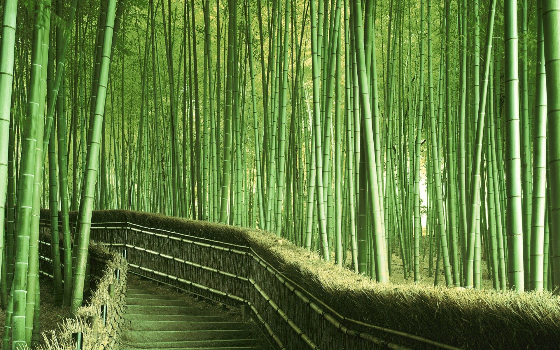 bamboo forest china wallpaper hgjkl pinterest china