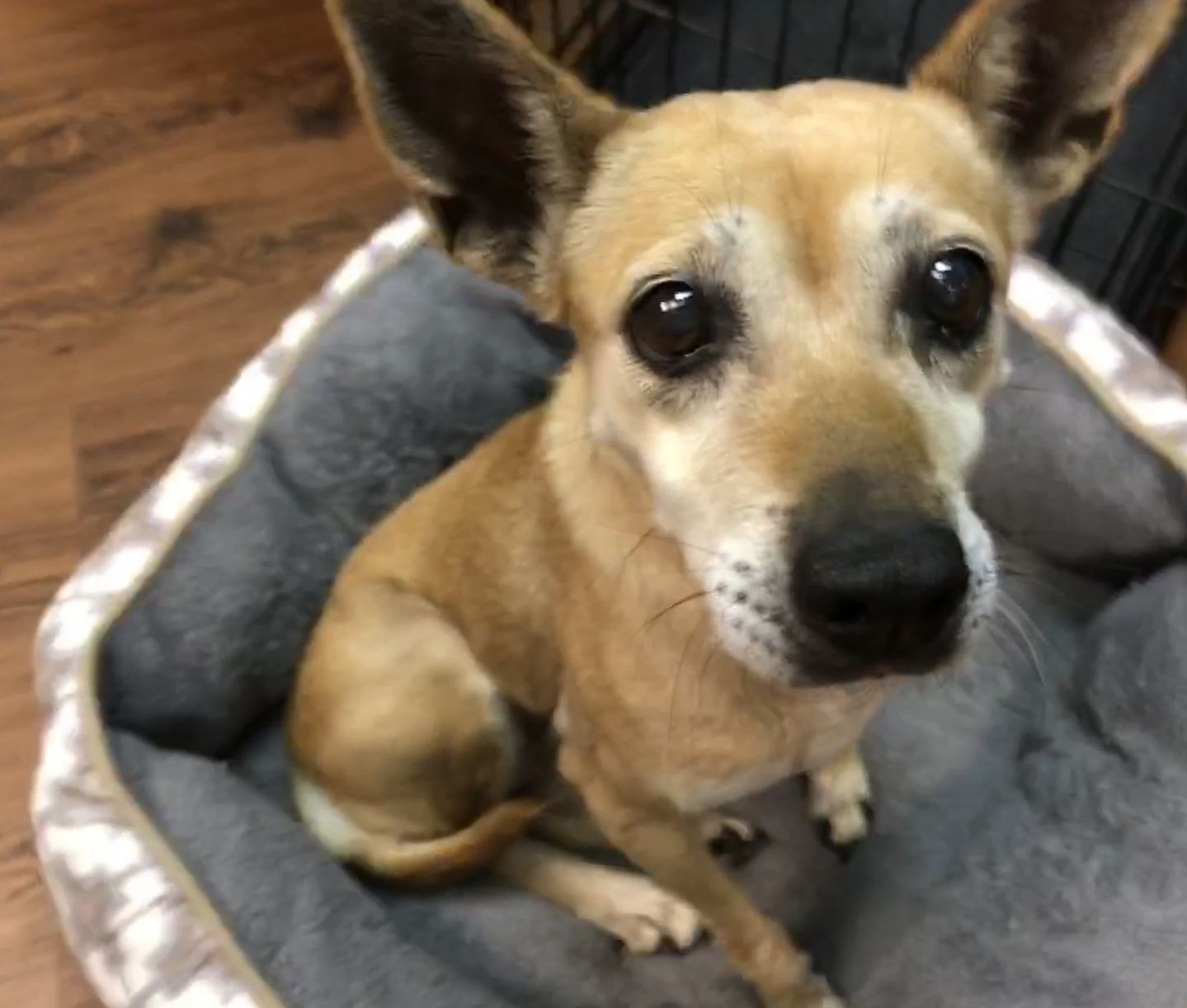 Adopt Trouble On Dog Adoption Animal Activist Animal Rescue