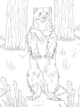 Wolverine Standing Up Coloring Page Super Coloring Wolverine Animal Animal Coloring Pages Dog Coloring Page