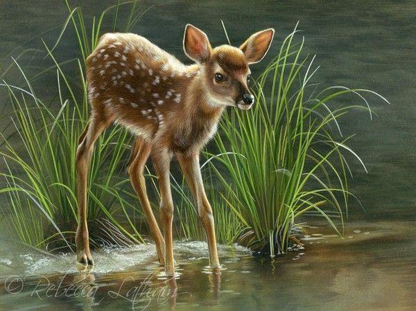 White-tailed calf deer - hesitated