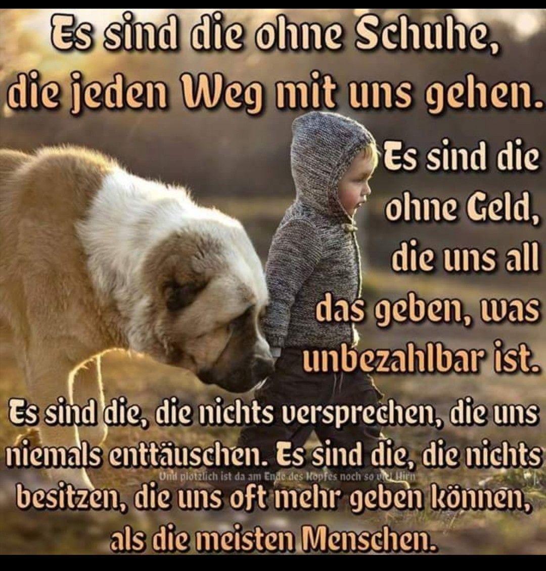 Pin Von Ludwig Stefan Krueger Auf Weise Worte Gedichte Zitate In 2020 Spruche Tiere Hunde Gedichte Zitate Tiere