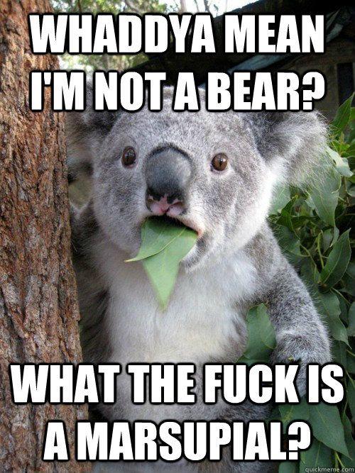 NOT A BEAR?!