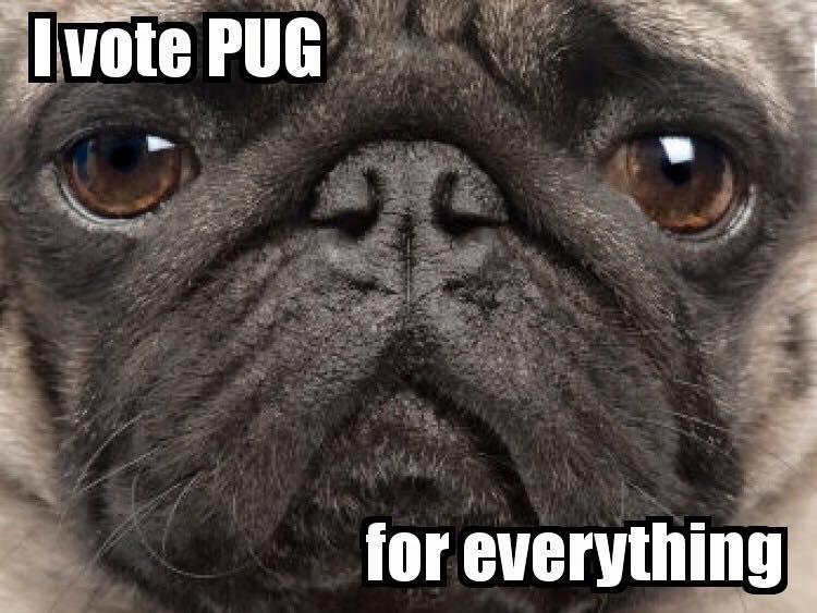 Funny Pug Dog Meme Pun LOL | Pugs | Pinterest | Meme, Dog ...