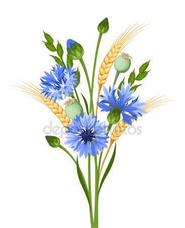 Bukiet Chabry I Pszenicy Ilustracja Wektorowa Ilustracja Stockowa 115112428 Botanicheskie Risunki Cvetochnye Kartiny Botanicheskie Printy