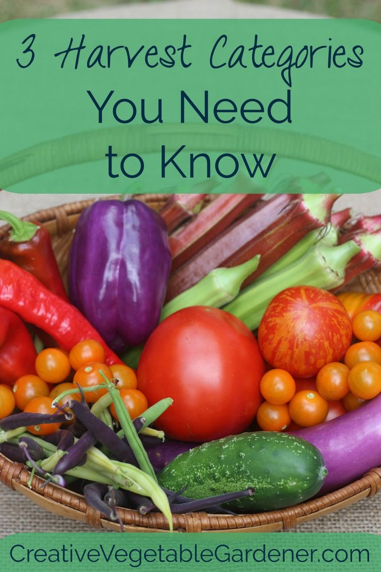 Getting more food from your garden is an attainable goal. You just need to understand some of the different characteristics of the vegetables you grow.