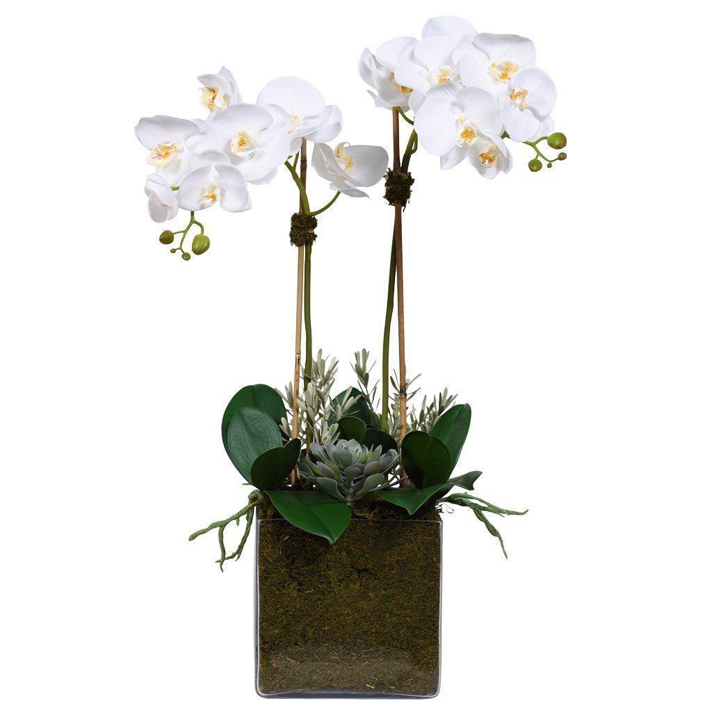 Orchid & Succulent Arrangement (Square Vase) Orchid