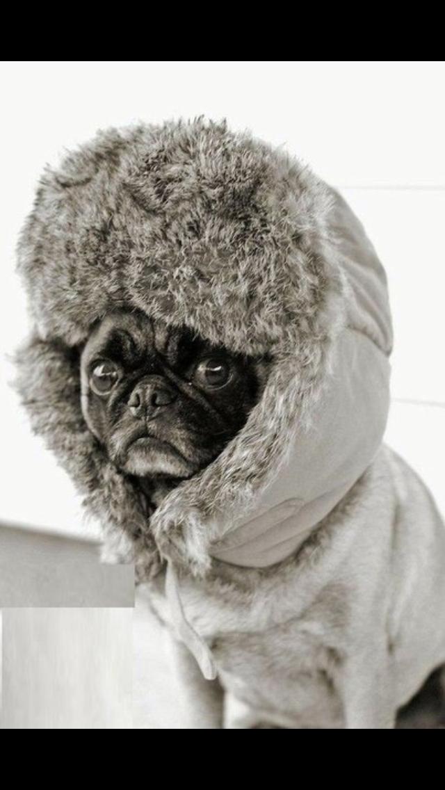 Холод картинки смешные, днем