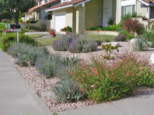 Drought tolerant landscaping southern california google for Drought tolerant yard