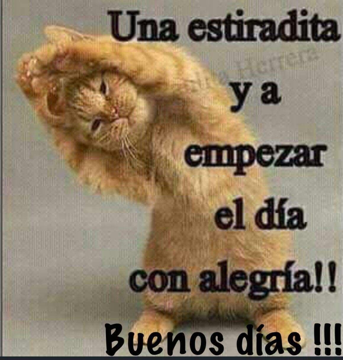 Pin By Gladis Sanchez On Buenos Dias A La Vida Good Morning Quotes Funny Spanish Memes Good Morning Greetings