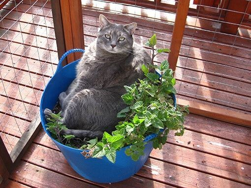 5 Plants Your Cat Might Like Just As Much As Catnip Cat