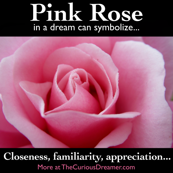 A Pink Rose As A Dream Symbol Can Mean More At Thecuriousdreamer Com Dreams Dreammeaning Dreamsymbols Roses Dream Symbols Dream Meanings Happy Flowers