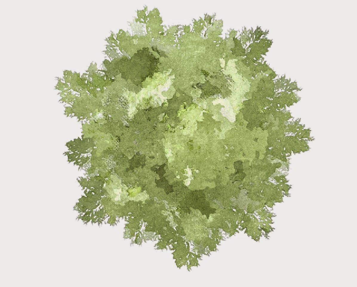 Top view plants 02 2d plant entourage for architecture - Ba Garden Design Y3 Greenwich Uni Robert Dickie 2d Tree Rendering In Photoshop