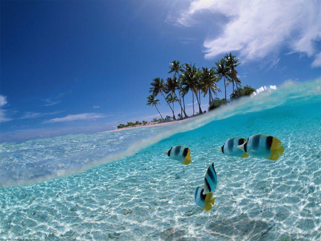 Wallpaper Pemandangan Bawah Laut Berita Pos Online