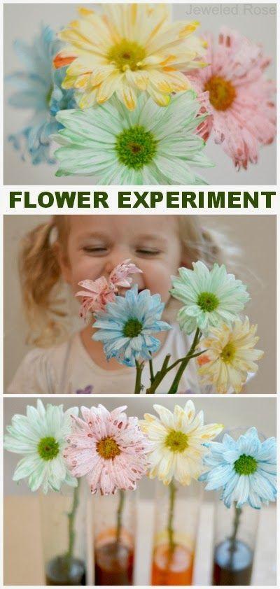 Carnations Science Fair Rainbow