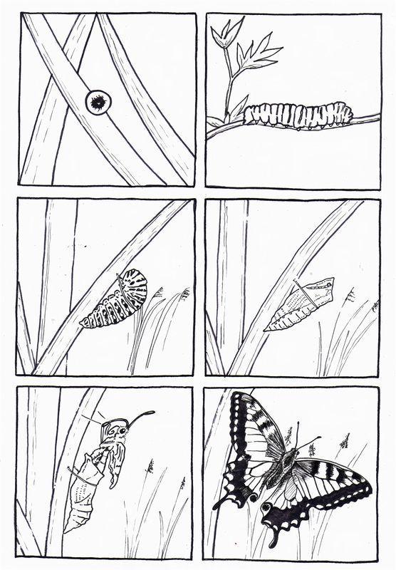 6 images séquentielles de la chenille au papillon: