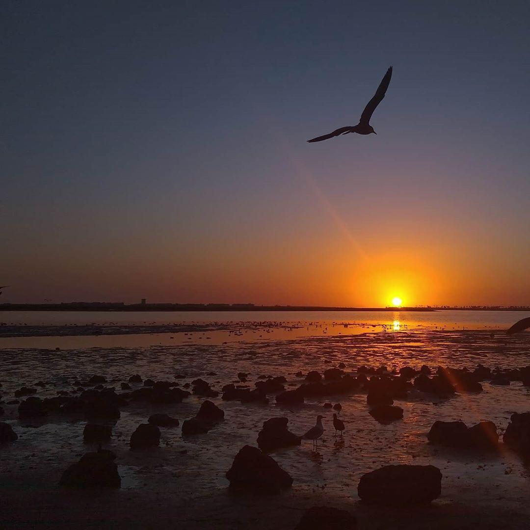 End of another day,... 🌅🦅  #sun #horizon #sunset #sunsetlover #westcoast #pacific #west #travel #bay #sandiegobay #tuesday #bajacalifornia #traveldestination #skycolors #skyblue #clearskies #clearmind #relaxation #breeze #wind #sunrays #newyorker #sandiegan #sandiego_ca #californiabaja #california