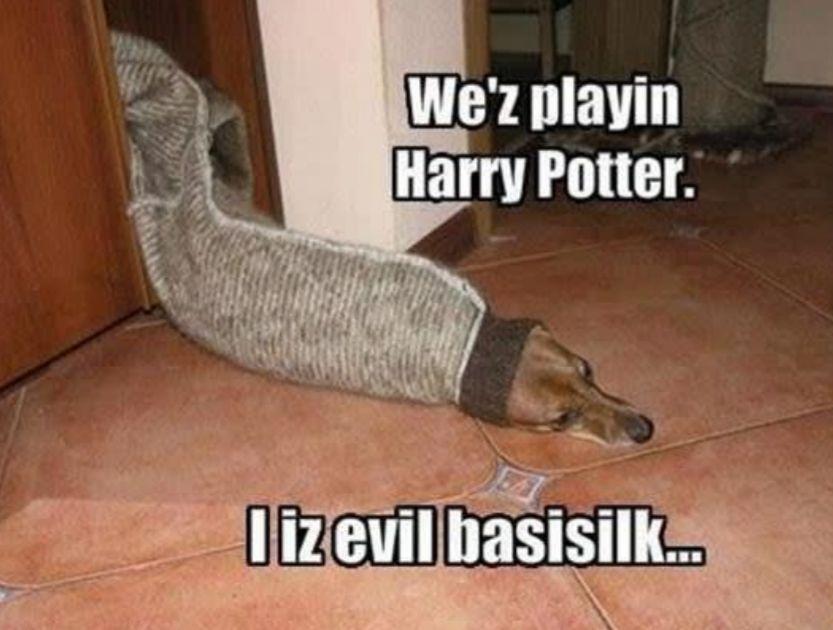 Da meine Freundin gerade voll auf dem Harry Potter Trip ist ,habe ich… #humor # Humor # amreading # books # wattpad