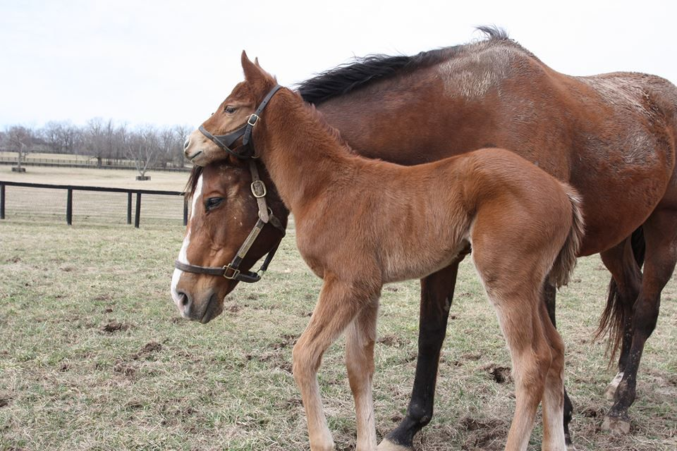 Here is our beautiful filly by Animal Kingdom out of Somethinaboutbetty.