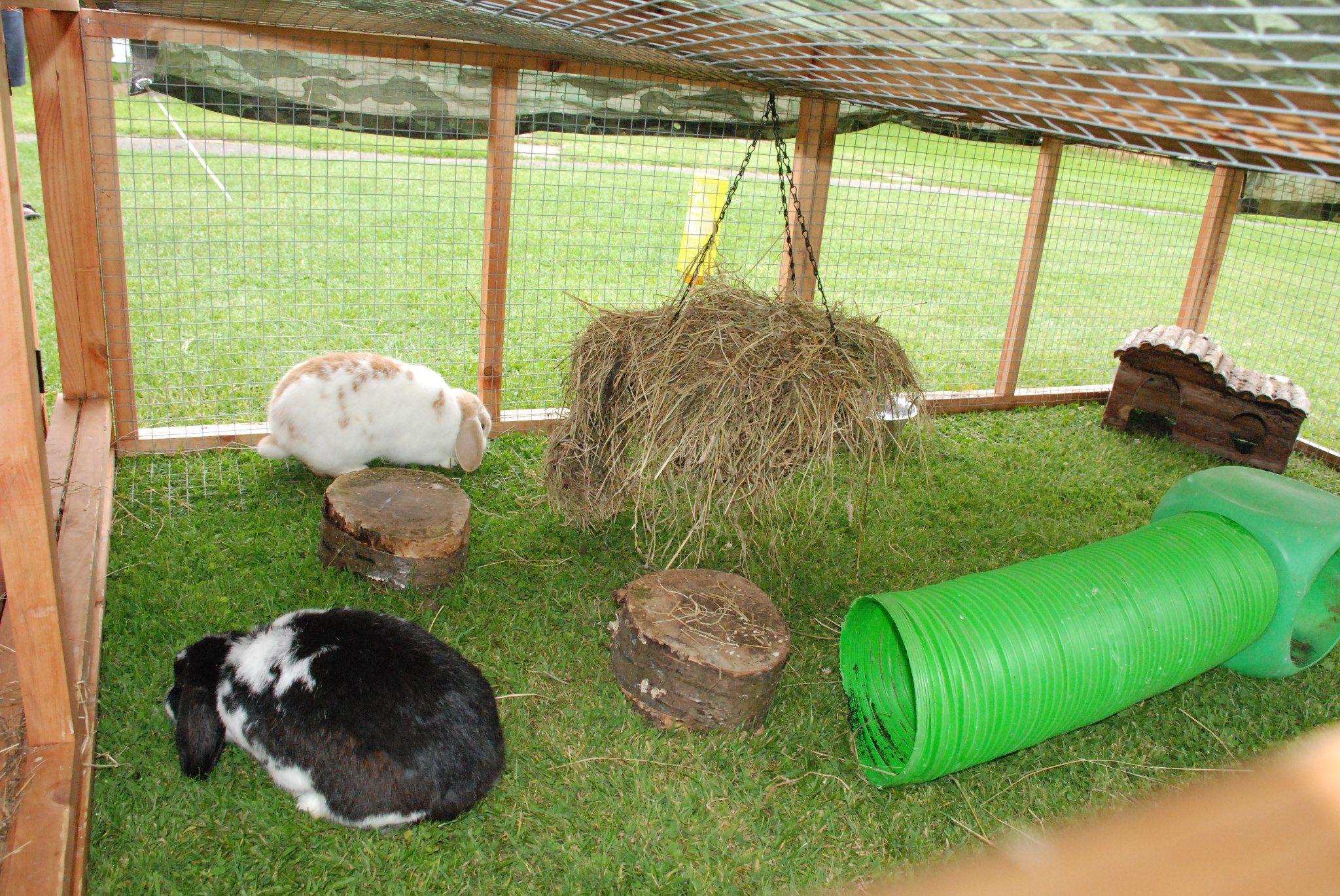 Spacious rabbit run outdoors need to make pinterest for Outdoor rabbit enclosure ideas