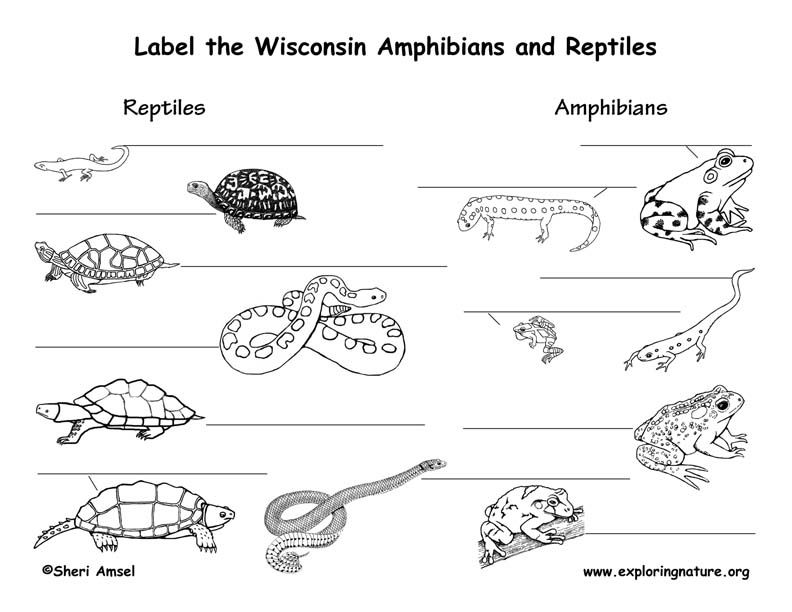 Wisconsin Turtle Coloring Pages Sea Turtle Species Reptiles