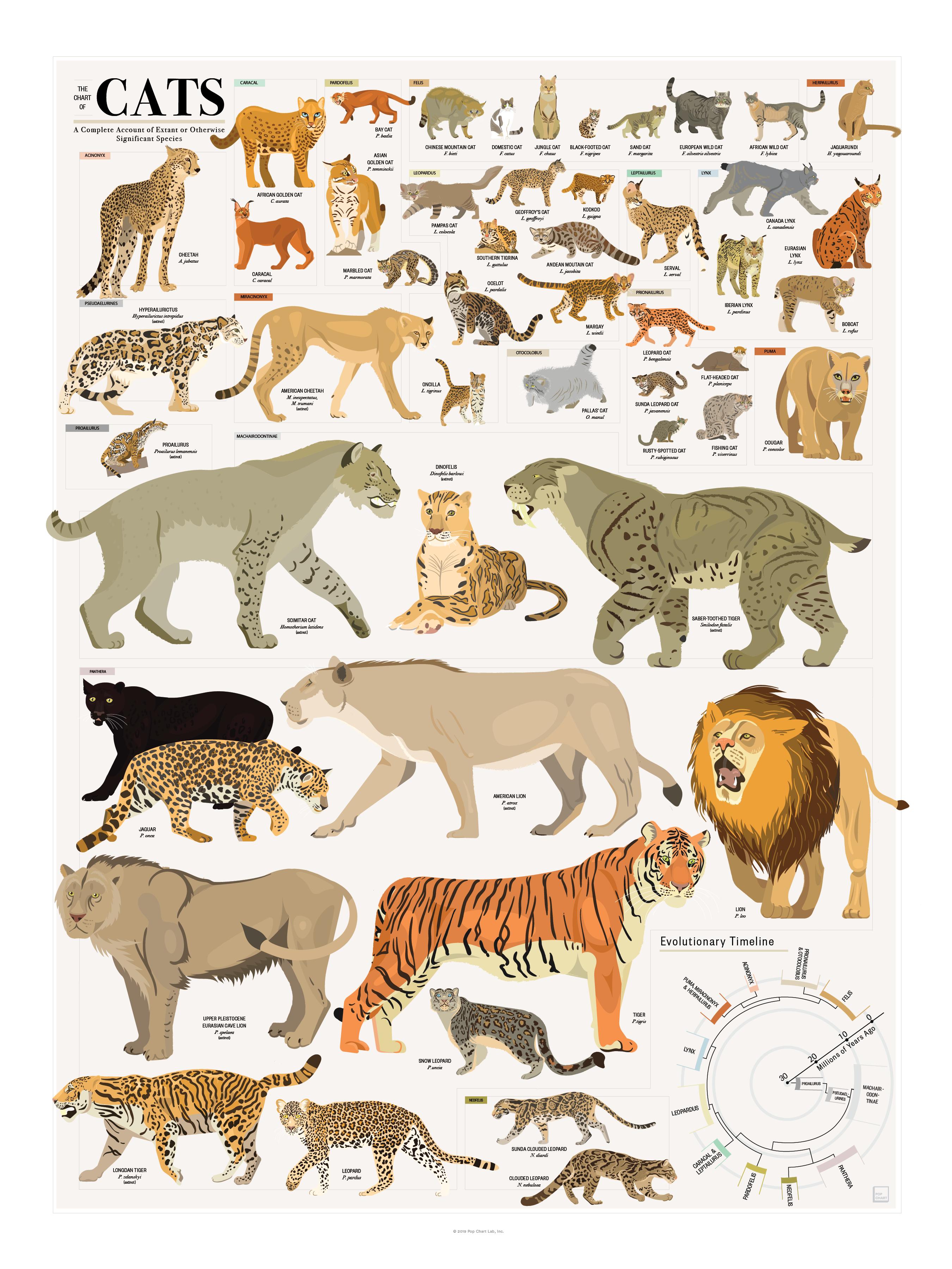 The Chart Of Cats In 2020 Cat Species Big Cats Art Cat Shedding