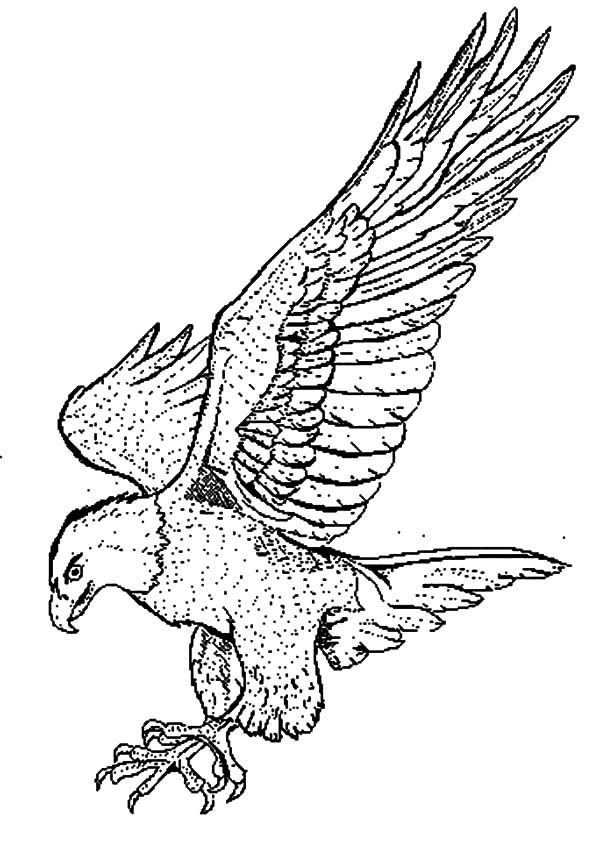 falcon coloring pages - photo#12