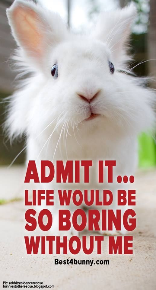 Admit it... Life would be boring without bunnies! www.best4bunny.com