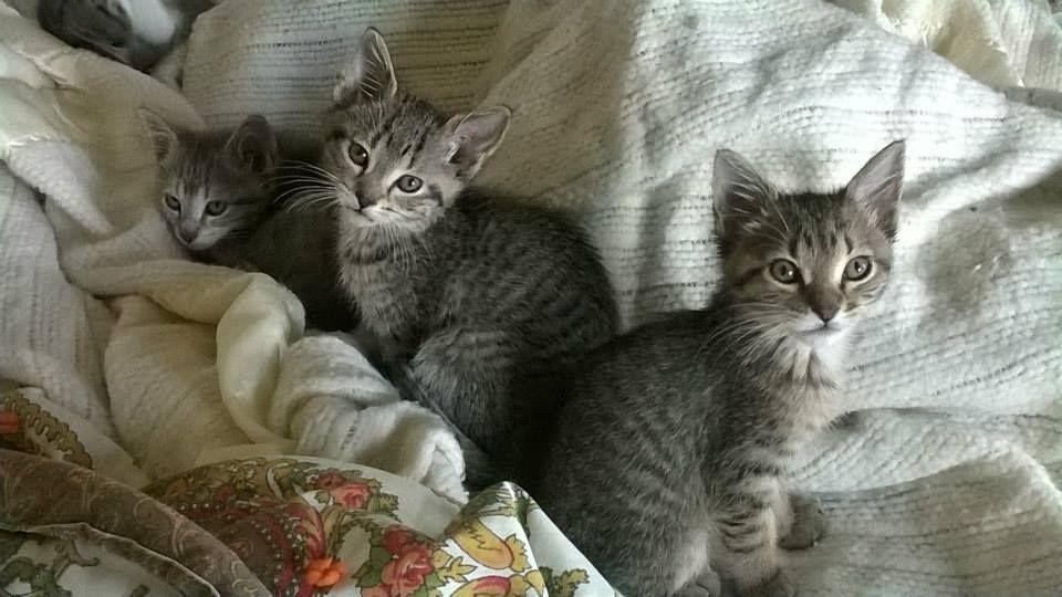 Sleepy kittens tucked in for bed Sleepy kitten, Kittens