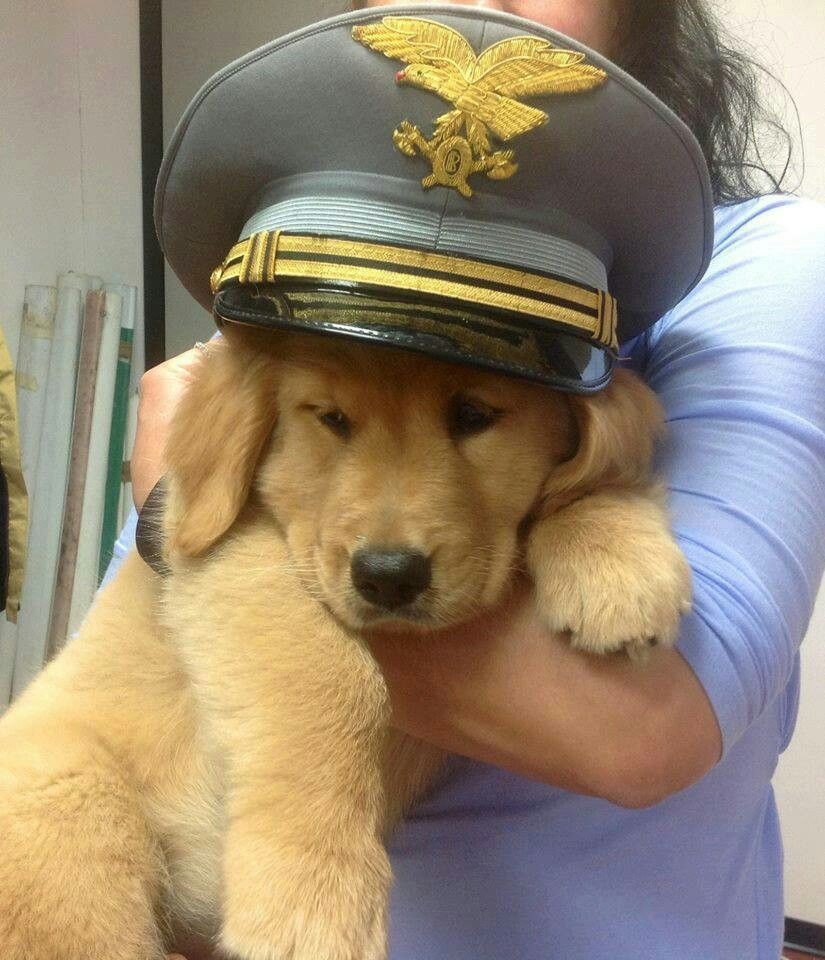 I Don T Want To Be The Captain Kin I Jus Go Play K Dog Love Golden Retriever Labrador Dogs Golden Retriever