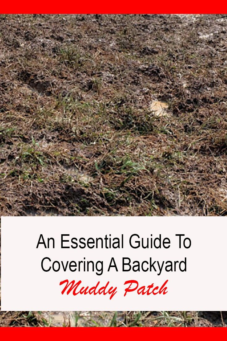 How to Cover Up Mud in the Backyard: Easy Guide 2020 ...