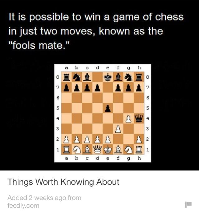 fool s mate chess team pinterest chess
