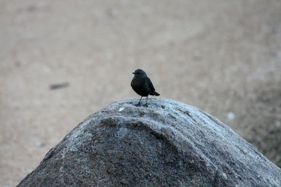 Bird sitting on rock Reno, NV Photo taken by Natalie