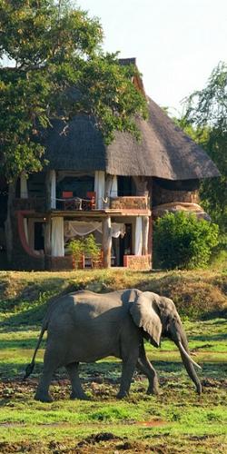 #safarirejser, safarirejser, elefanter