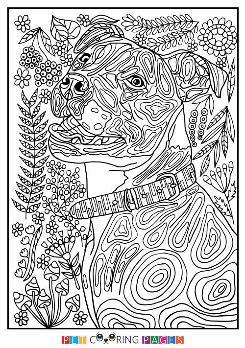 Free printable American Pit Bull Terrier coloring page available for ...