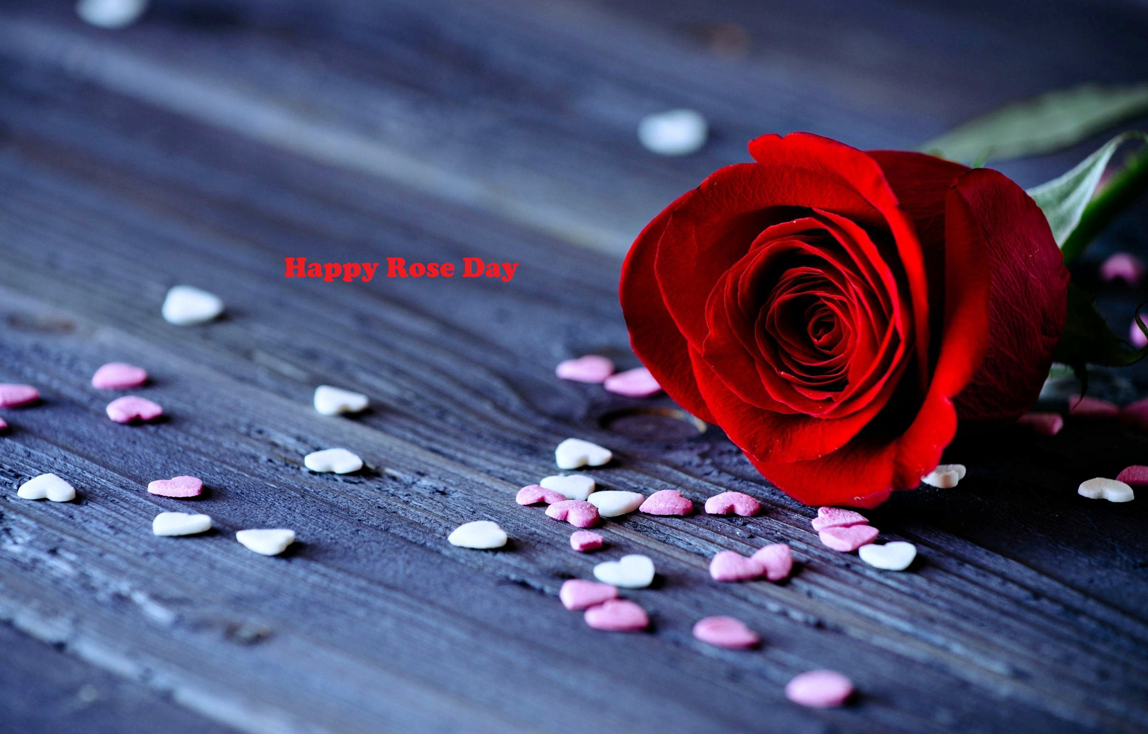 Happy Rose Day Pictures Rose Day Wallpapers Rose Day Hd Pics Free Download Rose Day Photos For Lo Good Night Flowers Good Night Wallpaper Rose Day Wallpaper
