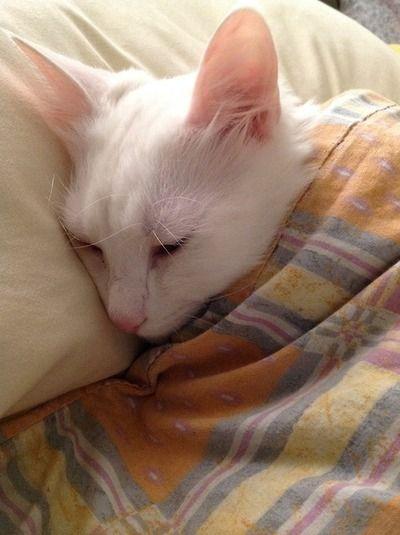 nestled all snug in her bed...
