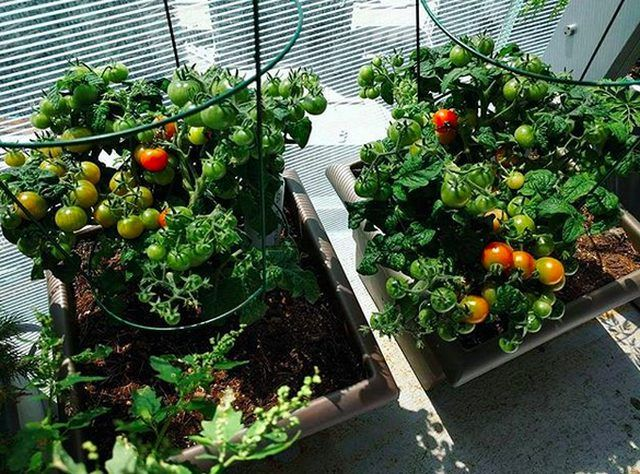 Want To Grow A Balcony Garden Start With These Easy 400 x 300