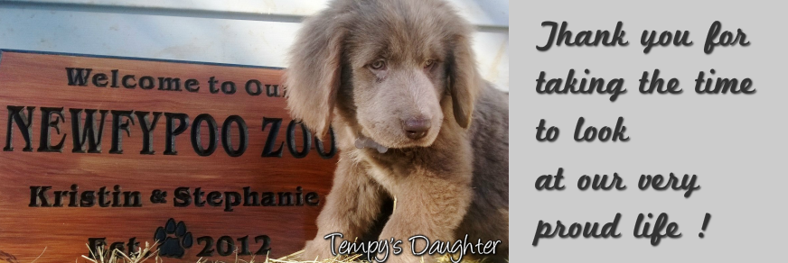 puppies Puppies for sale in Michigan Havanese and