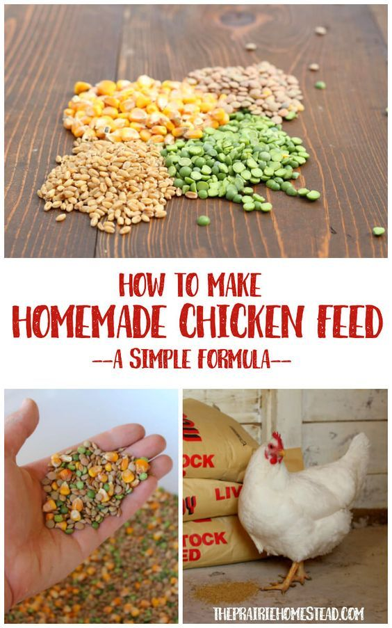 Homemade Chicken Feed Recipe Homestead Chickens Coops Building