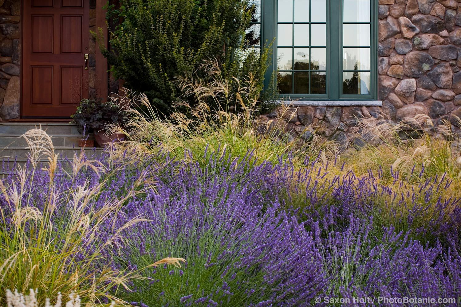 Save Water Front Yard Meadow Garden With Lavender And Ornamental Gr Stipa Gigantea Anemanthele Lessoniana Design Maile Arnold