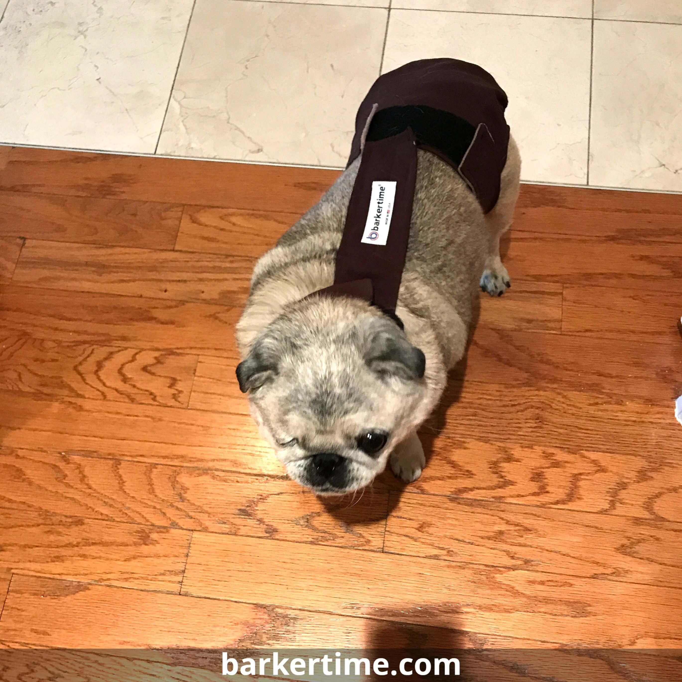 Fits great! Barkertime Dog diapers, Dog design, Fur babies