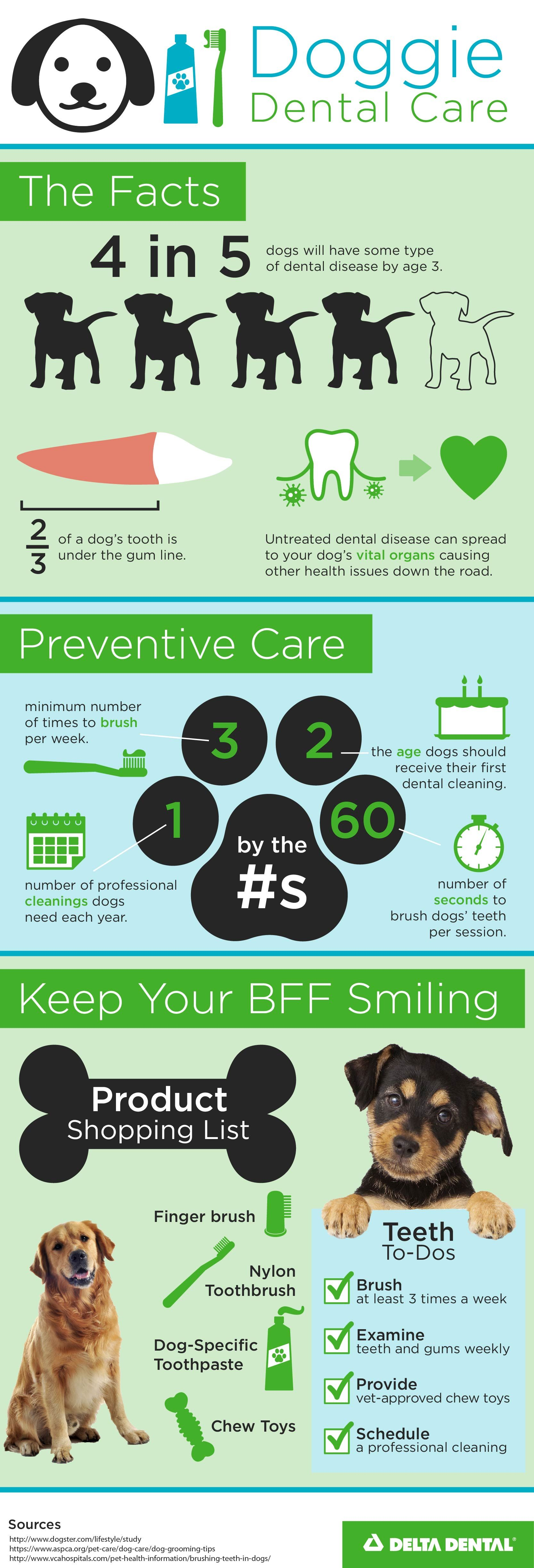 Are you taking proper care of fido and fluffys chompers