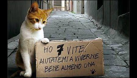 Ami gli animali? Adotta un gatto