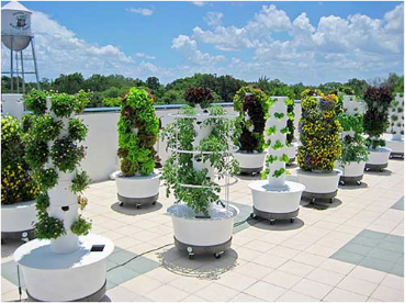 The Tower Garden Growing System Comes With Everything You Need To Start  Growing Vegetables, Herbs