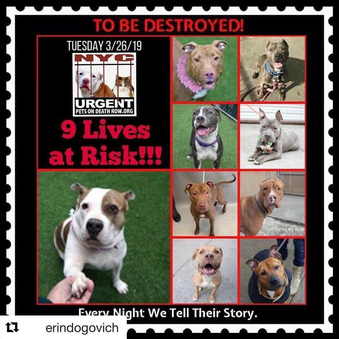 Repost Erindogovich 9 Dogs 9 Precious Souls At Risk 3 26