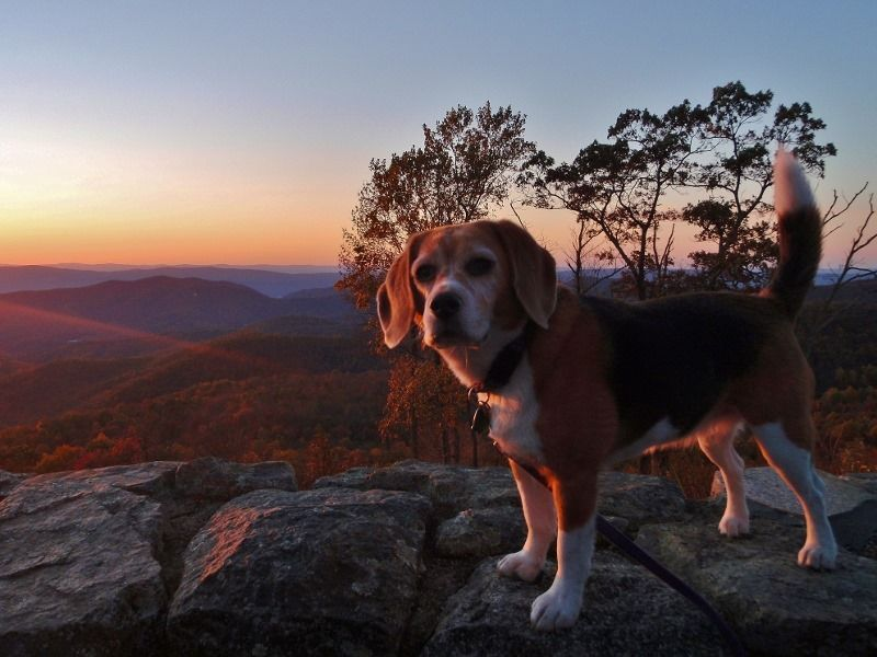 Angie checks out the sunset on the Blue Ridge Parkway