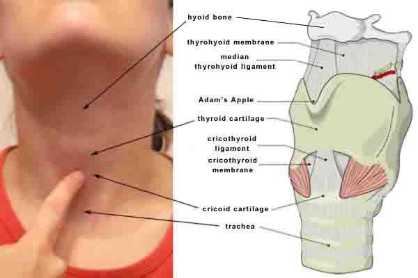 Lump In The Throat Globus Pharyngeus Mucus In Throat Lump In